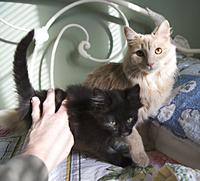 photo of kitties